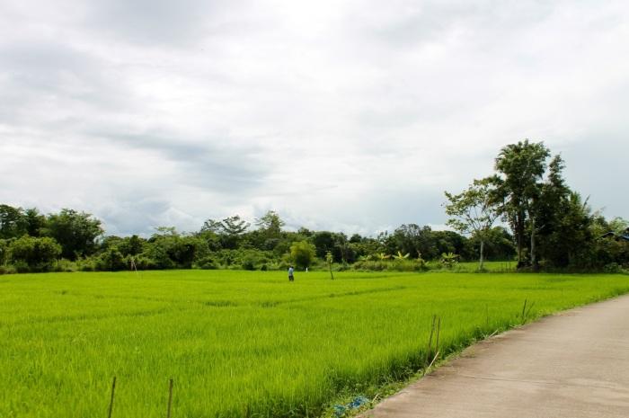 thai country // kitschandcamera.com
